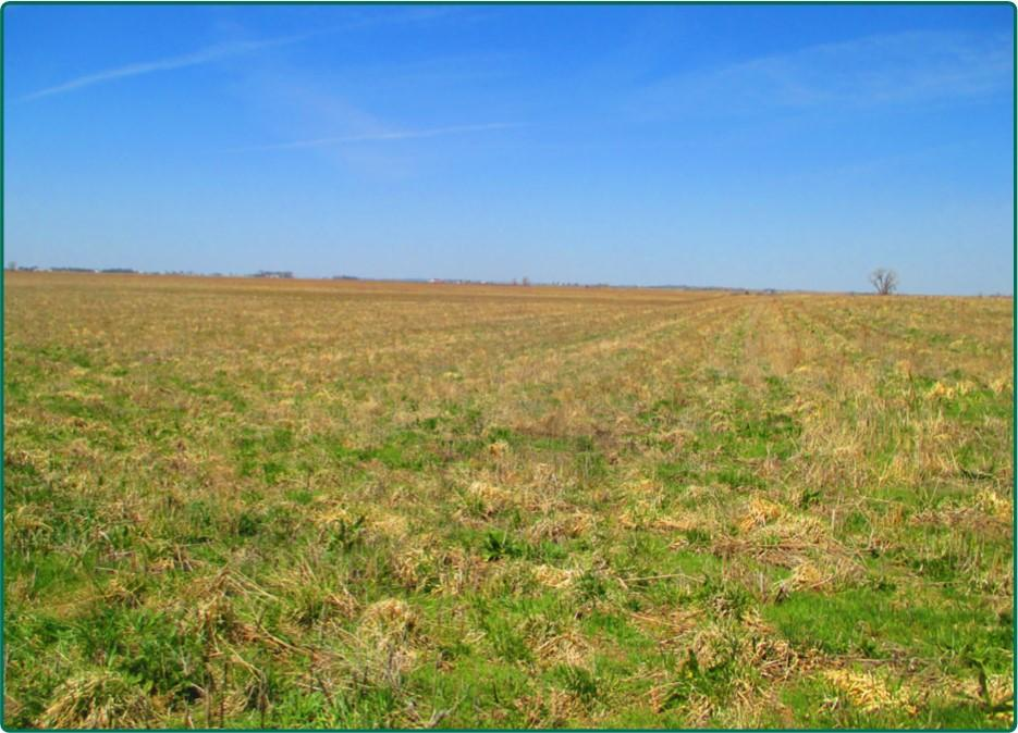 0 260th St, Sergeant Bluff, Iowa 51052, ,Farm,For Sale,260th St,5541126